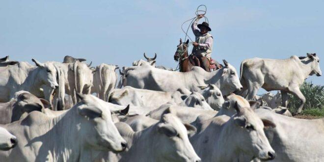El sector agropecuario es el motor de la economía beniana. Foto F Landivar