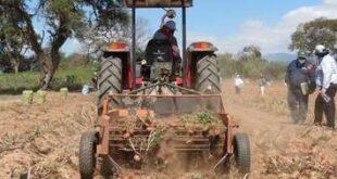 Los pequeños productores piden mas participación en los créditos del BDP (Foto: El Deber)