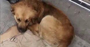 El can que acompañaba al indigente que falleció en La Paz.