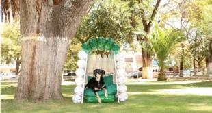 Un can en una %22pelucasita ecológica%22 en la plaza Sucre. Cortesía Luís Siles
