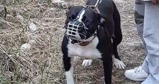 Uno de los perros que fue capturado por la Policía. Foto: ERBOL