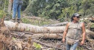 Varias organizaciones denuncian el desmonte ilegal de parques naturales
